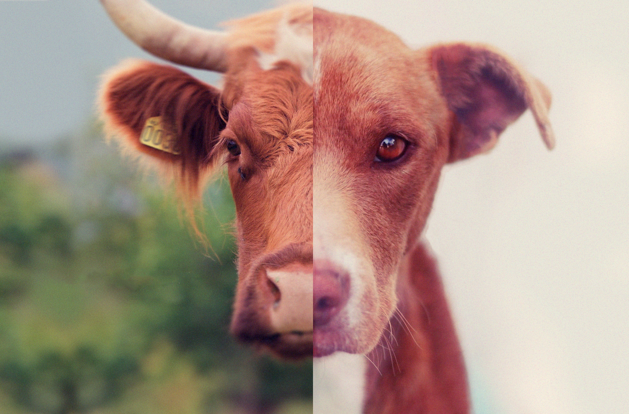 Embracing Veganism